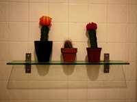 Cactuses in a restaurant's men's room