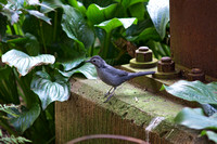 Catbird, Queens Zoo