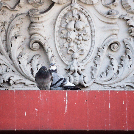 Pigeons, 14th Street and Broadway