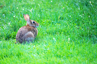 Rabbit, Brooklyn Botanic Garden